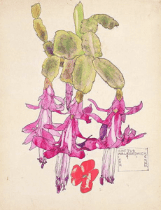 charlesmackintosh cautus wildflower pencil drawing preen lkbennett pink